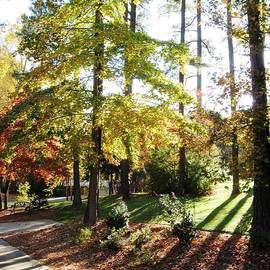 Raleigh North Carolina Lengthening Shadows Signal Fall has Arrived   by Catherine Ludwig Donleycott
