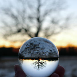 Lensball Tree at Sunset in Winter by David T Wilkinson