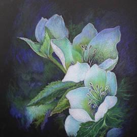 Lenten Rose by Elizabeth Allen