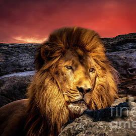 Leo The Lion 2 by Mitch Shindelbower