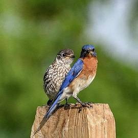 Lesson Of A Bluebird by Cindy Treger