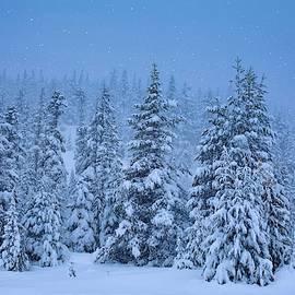 Let It Snow by Lynn Hopwood