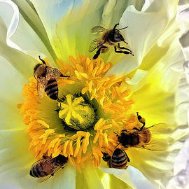 Let Me Be Your Honey Bee by Bunny Clarke