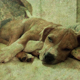 Let Sleeping Dogs Lie by C Jensen
