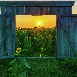 Let the Sunshine In by Angie Purcell
