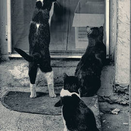 Let Us In by Claude LeTien