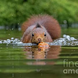 If It Swims Like A Duck by Nicole Wiggerman