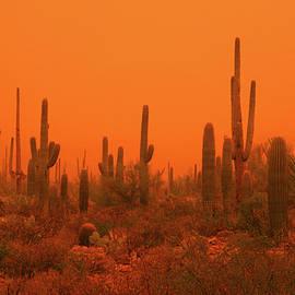 Life On Mars by Douglas Taylor
