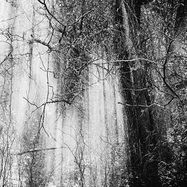 Light and Dark Foggy Trees Black and  White by Gaby Ethington