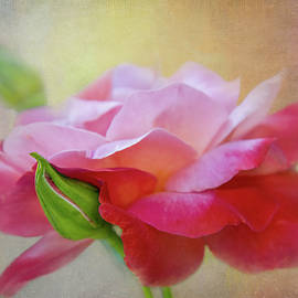 Light and Deep Rose by Terry Davis