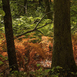 Light and shadows in the forest by Claudia M Photography