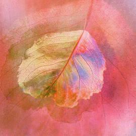 Light Leaf Loveliness by Terry Davis