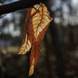 Light Through Leaves by Linda Howes