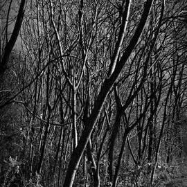 Light Through Trees - Monochrome by Frank J Casella