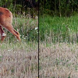 Like mother like child. White-tailed deer by Jouko Lehto