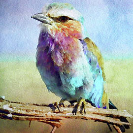 Lilac Breasted Roller by Susan Maxwell Schmidt