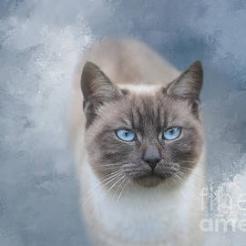 Lilac Point Siamese Cat by Elisabeth Lucas