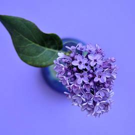 Lilac Princess by Gali-Dana Singer