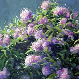 Lilacs by Rick Hansen