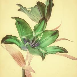 Lilies in Watercolor - Photo Painting by Barbara Zahno