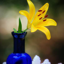 Lily and Cobalt Still Life by Marilyn DeBlock