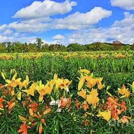 Lily Fields-New Jersey by Regina Geoghan