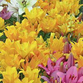 Lily Garden III by Regina Geoghan