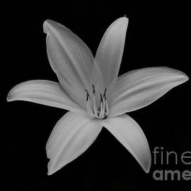 Lily in black and white by Katie Flenker