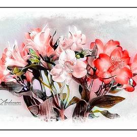 Lily Of The Incas  by CJ Anderson