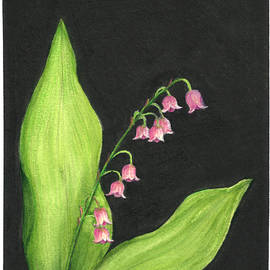 Lily of the Valley by Samantha Modert