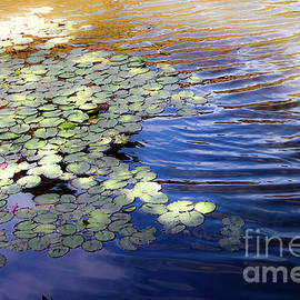 Lily pads on a shimmering pond by Valerie Sacks
