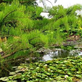 Lily Pond by Kathryn Jones