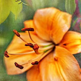 Lily_Orange by Gary McJimsey