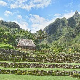 Limahuli Garden, Kauai by Catherine Sherman