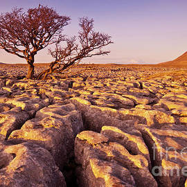 Limestone Pavement at White Scars, Ingleborough, Yorkshire Dales, England by Neale And Judith Clark