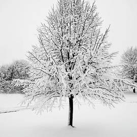 Linden in Winter by William Moore