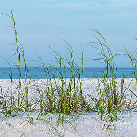 Line of Sea Oats In White Sand by Jennifer White