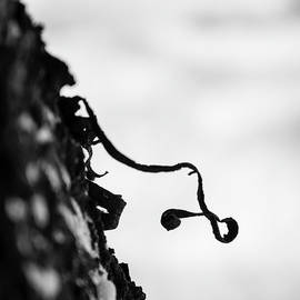 Lines on Tree Bark by Martin Vorel Minimalist Photography