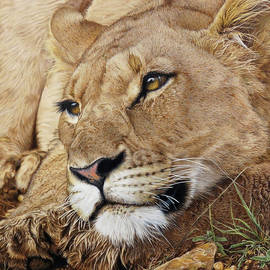 Lion Around by Kathryn Hansen