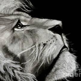 Lion by Mary DeLawder