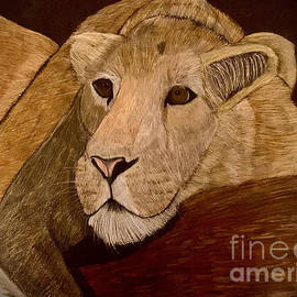 Lioness drawing by Alisha Sawyer