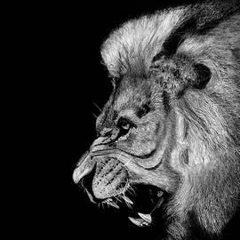 Lion's Fury by James Schultz