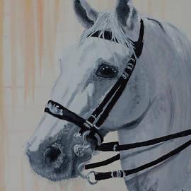 Lippizan horse with special bridle by Claudia Luethi alias Abdelghafar