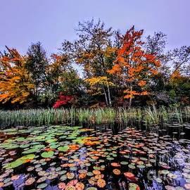Liquid Foliage - Webster Lake, New Hampshire by Dave Pellegrini