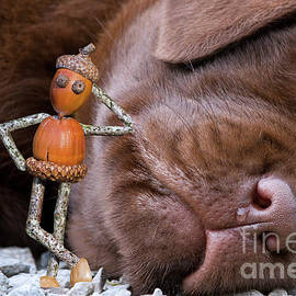 Little Acorn Man Posing with Pup by Arterra Picture Library