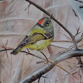 Little bird resting on a branch
