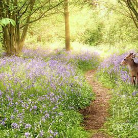 Little deer in bluebell woodland by Simon Bratt Photography LRPS
