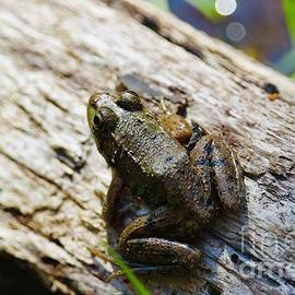 Little Green Frog Close  by Jessica Mumford