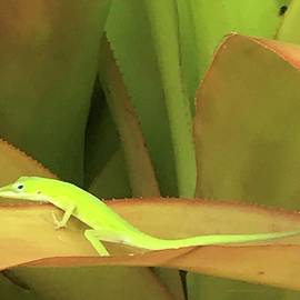 Little Green Visitor by Barbie Corbett-Newmin