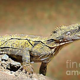 Little Lizard by Trudee Hunter